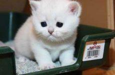Симптомы и признаки запора у кошки