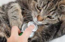 Симптомы и признаки панкреатита у кошек