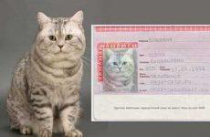 Красивые имена для кошек: список