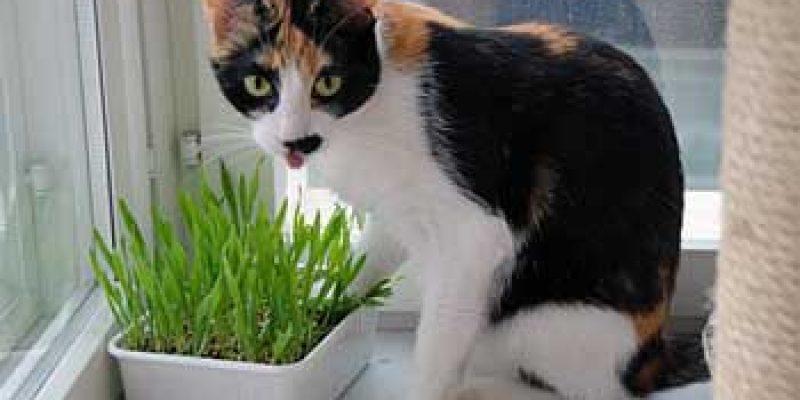 Узнайте как определить сколько кошке лет в домашних условиях?