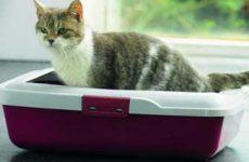 Лечение поноса у кошки: лекарства и препараты