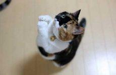 Лучшие корма для кошек: рейтинг ветеринаров