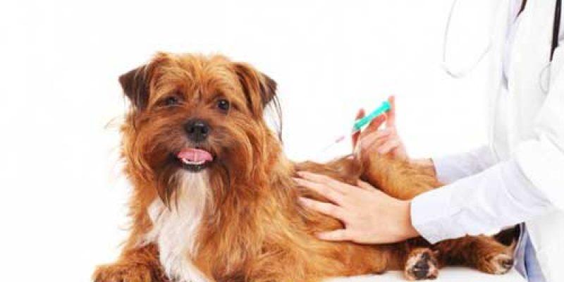 Прививки собакам по возрасту: таблица с ценами