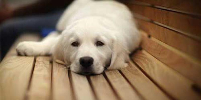 Почему собака не ест сухой корм и не пьет воду?