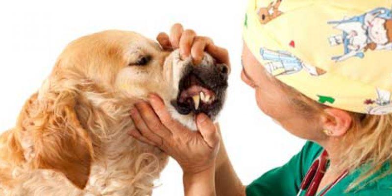 Возраст собаки по человеческим меркам: таблица