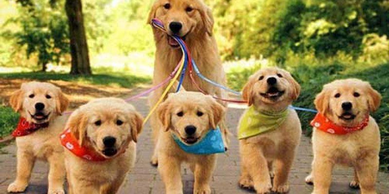 Красивые клички для собак девочек маленьких пород