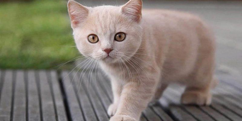 Список красивых, легких и прикольных кличек для кошек и котов разных пород