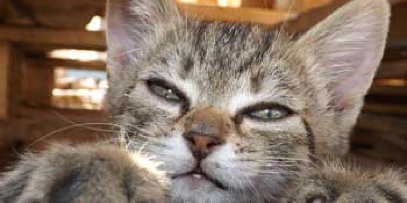 Узнайте в каком возрасте удаляют когти кошкам?