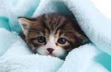 Чем мыть котенка если нет специального шампуня? Можно ли мыть котенка обычным шампунем?