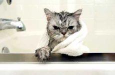 Узнаем можно ли мыть кошек дегтярным мылом, хозяйственным, детским, обычным?