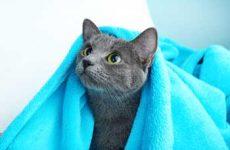 Можно и нужно ли мыть кошек? В домашних условиях, кормящих, после родов и в прочих ситуациях?