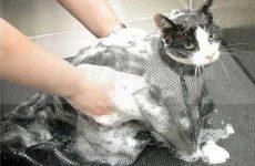 Узнаем можно ли мыть кошку человеческим шампунем: обычным или детским?